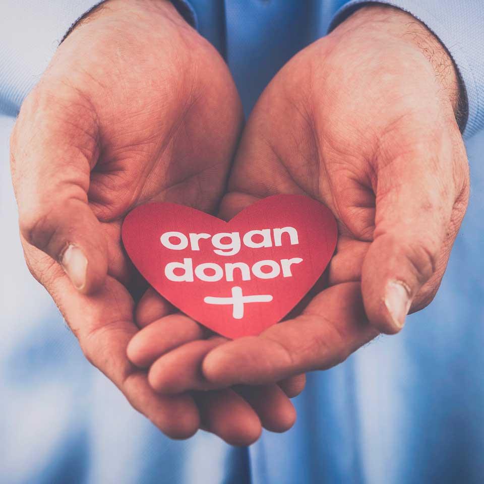 Organ Donor Hands